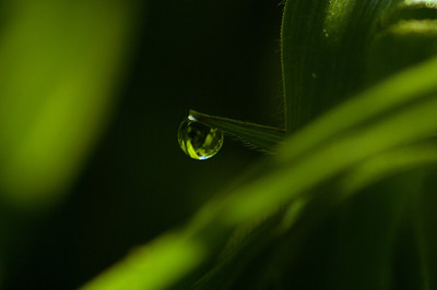Raindrops, Dewdrops, and other Small Inanimate Objects...
